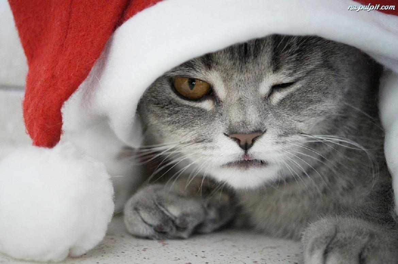 Uk Tv Adverts  Animals Cats